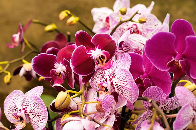 Какой цветок подходит по знаку зодиака?
